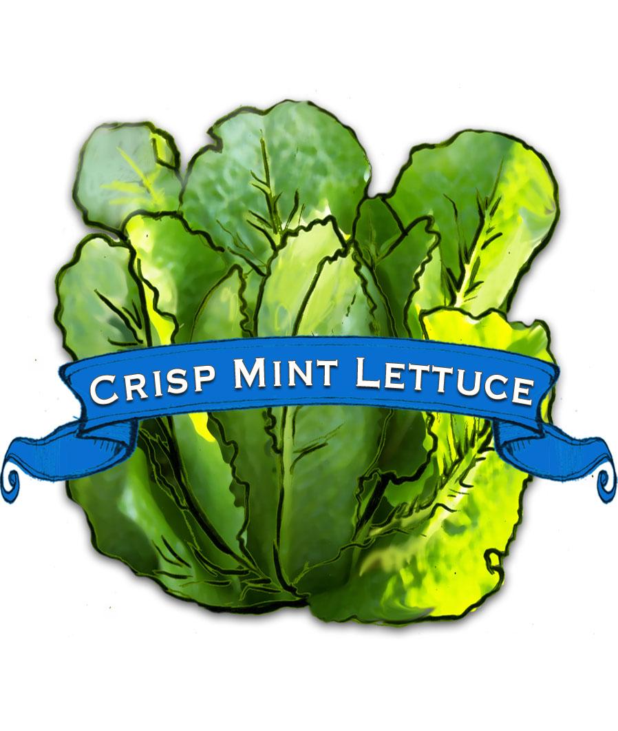 Crisp Mint Lettuce