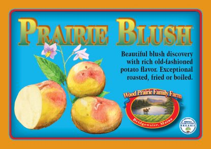 Organic Certified Prairie Blush Seed Potatoes