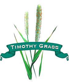 Grass Seed. Organic Timothy.