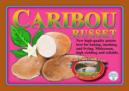Organic Certified Caribou Russet Seed Potatoes