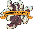 Bean (Dry) Seed. Organic Jacob's Cattle. Heirloom.