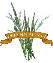 Grass Seed. Organic Perennial Rye.