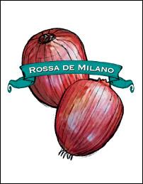 Onion Seed. Organic Rossa di Milano. Heirloom. Pkt.