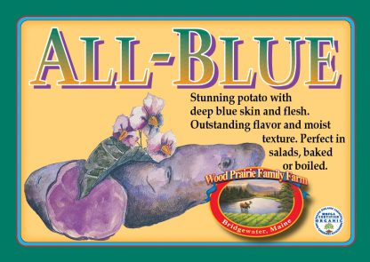 Organic All Blue Potatoes for the Kitchen. Heirloom.