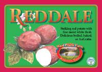 Organic Certified Reddale Seed Potatoes