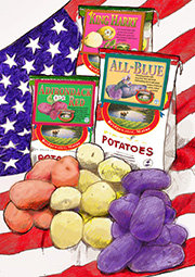 Organic Certified Red, White and Blue Seed Potato Collection