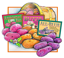 8 lbs Organic Wood Prairie Potato / Fingerlings Sampler