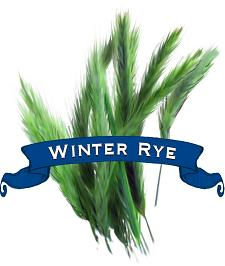 Rye Seed. Organic Common Winter.