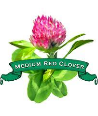 Clover Seed. Organic Medium Red.
