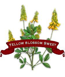Clover Seed. Organic Yellow Blossom Sweet.