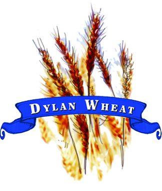 Wheat Seed. Organic Hard Red Spring Dylan.