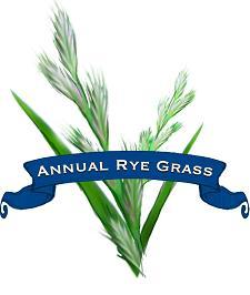 Grass Seed. Organic Annual Rye.