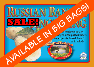 Organic Certified Russian Banana Seed Potatoes