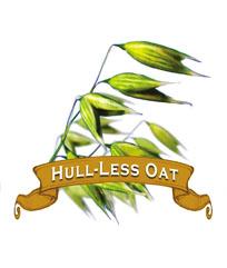 Oat Seed. Organic Hull-less.