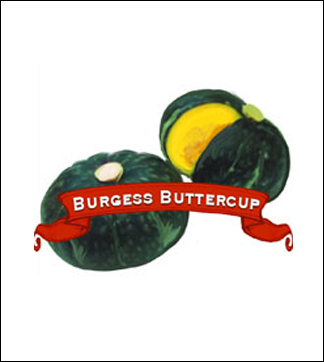 Squash Seed. Organic Winter Burgess Buttercup. Heirloom. Pkt.