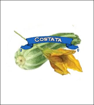 Zucchini Seed. Organic Summer Costata. Pkt.