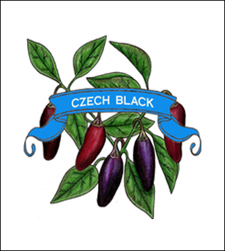 Pepper Seed. Organic Czech Black. Heirloom. Pkt.