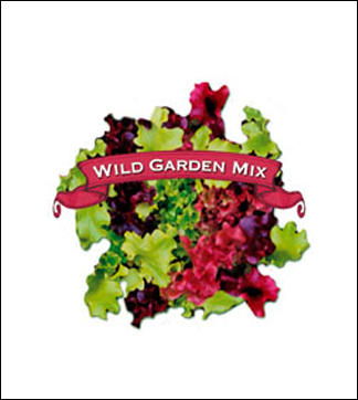 Salad Seed. Organic Fall & Winter Mix. Pkt.