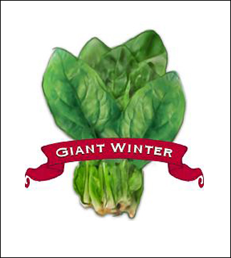 Giant Winter spinach label.