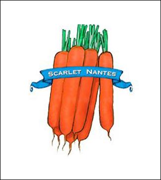 Carrot Seed. Organic Scarlet Nantes. Pkt.