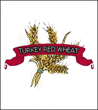 Wheat Seed. Organic Hard Red Winter Turkey Red. Heirloom.