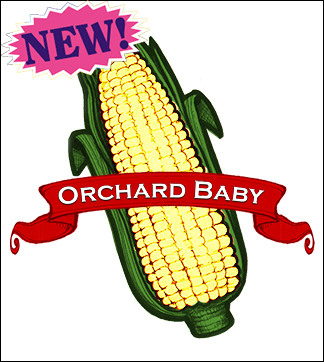 Sweet Corn Seed. Organic Orchard Baby. Pkt.