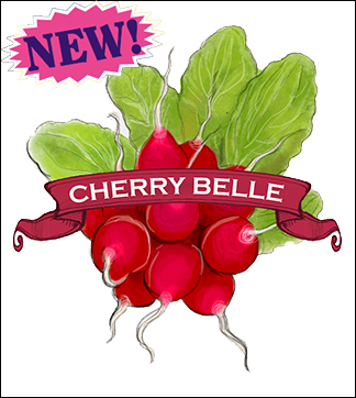 Radish Seed. Organic Cherry Belle. Heirloom. Pkt.