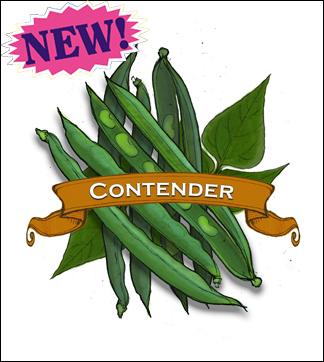 Bean Seed, Organic Contender.