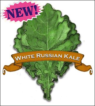 Kale Seed. Organic White Russian. Pkt.