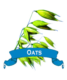 NEW! Oat Seed. Organic Common.