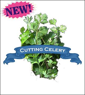 Herb Seed, Organic Cutting Celery. Pkt.