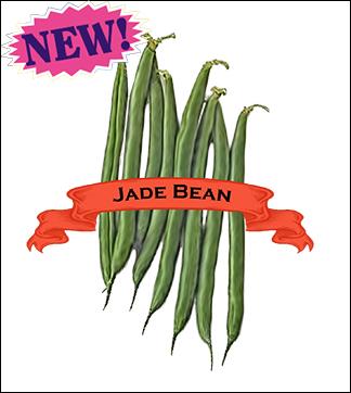 Bean Seed, Organic Jade. Pkt.