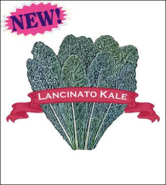 Kale Seed. Organic Lancinato. Pkt.