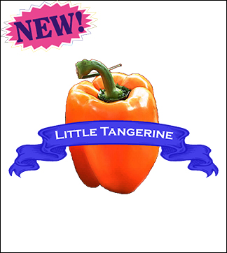 Pepper Seed, Organic Little Tangerine. Pkt.