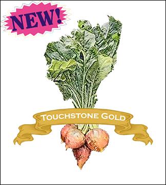 Beet Seed, Organic Touchstone Gold. Pkt.