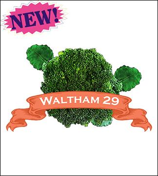 Broccoli Seed, Waltham 29. Pkt.