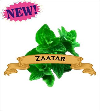 Herb Seed, Organic Zaatar Marjoram. Pkt.
