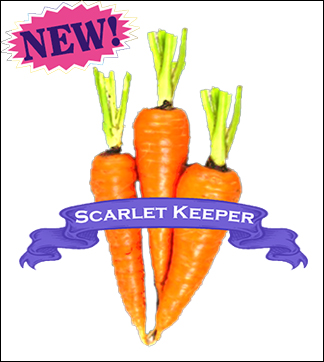 Carrot Seed. Organic Scarlet Keeper. Pkt.