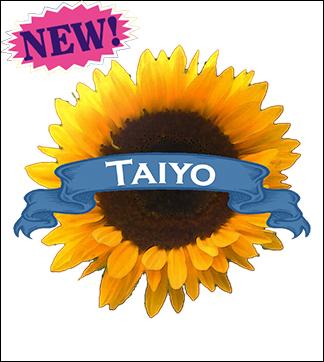 Flower Seed, Organic Taiyo Sunflower. Pkt.