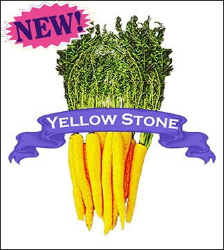 Carrot Seed. Organic Yellow Stone. Pkt.
