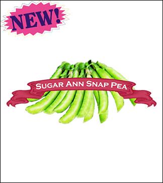 Pea Seed, Organic Sugar Ann Snap. Pkt.
