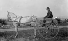 May be an image of one or more people, horse and outdoors
