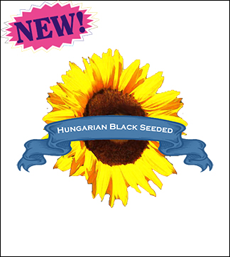 Flower Seed, Organic Hungarian Black Seeded Sunflower. Pkt.