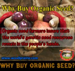 Dry Corn Seed. Organic Dakota Ivory.